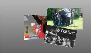 Collage Kurs